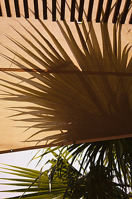 Close-up of awning and palm trees against sky - p301m1498857 by Halfdark