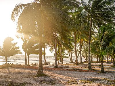 Palmenhain am Strand im Wind - p393m1452287 von Manuel Krug
