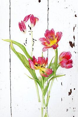 Tulpen - p979m910004 von Rueggeberg