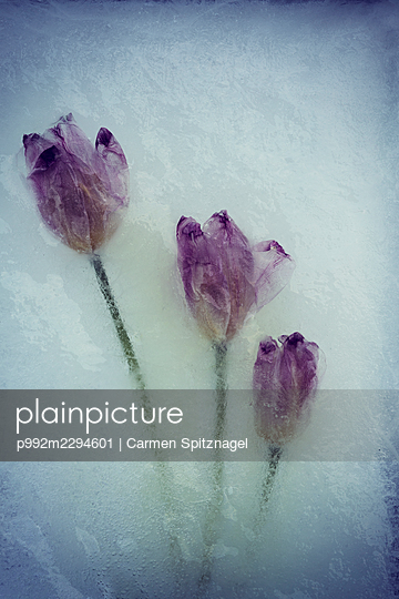 p992m2294601 by Carmen Spitznagel