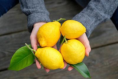 Hands holding four lemons, close-up - p300m1580759 von Lisa und Wilfried Bahnmüller