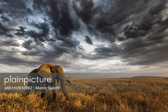 Seronera, Serengeti National Park, Tanzania, East Africa - p651m2032562 by Marco Gaiotti