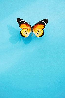 Butterfly - p1006m1040338 by Danel