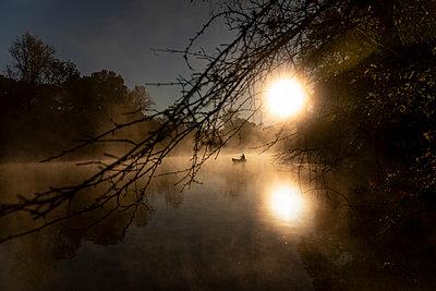 Sunrise canoe ride on foggy river. - p1166m2269657 by Cavan Images