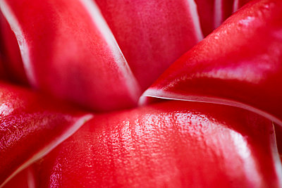 Red Tropical Flower Detail  - p6941882 by Maria K