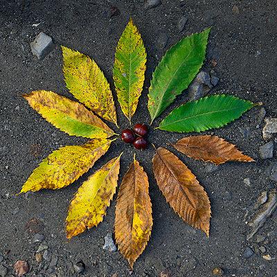 Herbstbild - p829m741654 von Régis Domergue