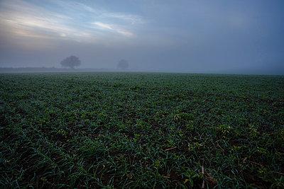 Feld im Morgenlicht I - p1057m856403 von Stephen Shepherd