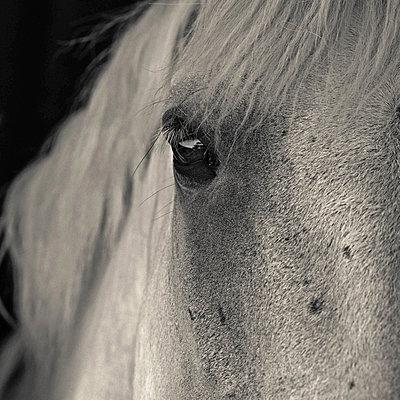 Horse - p1594m2160854 by Françoise Chadelas
