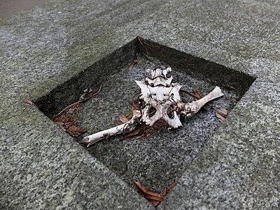 Skelett in einer Vertiefung - p240m1468124 von Valerie Wagner