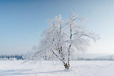 Verschneiter Baum - p586m2005071 von Kniel Synnatzschke