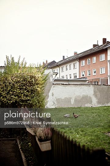 Hühner in einem Hinterhof in der Stadt - p586m972968 von Kniel Synnatzschke