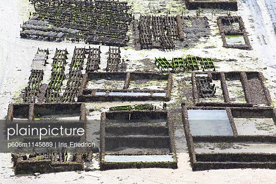 Austernzucht, Cancale - p606m1145889 von Iris Friedrich