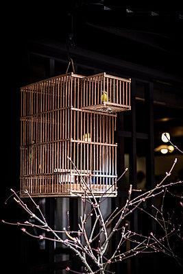 Birdcage - p1042m1020622 by Cardinale