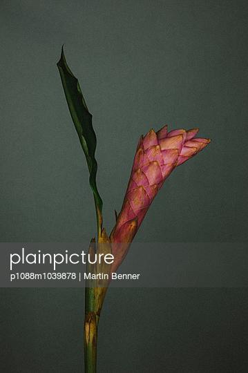 Ginger blossom - p1088m1039878 by Martin Benner