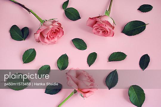 Rosen und abgezupfte Blätter      - p450m1573459 von Hanka Steidle
