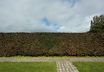 Hedge on graveyard - p1132m1492422 by Mischa Keijser