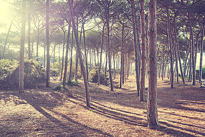 View of summer forest - p312m1533035 by Oscar Wettersten