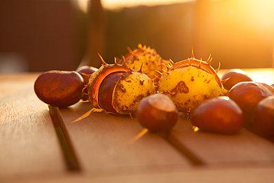 Late autumn afternoon - p454m2052767 by Lubitz + Dorner