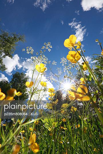 Blühende Wiesenblumen und Sommersonne - p235m808064 von KuS
