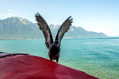 Pontoon, Lake Geneva - p813m1057217 by B.Jaubert