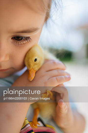 Girl holding a yellow duckling in her hands closeup. - p1166m2200103 by Cavan Images