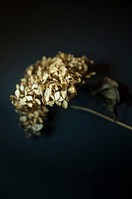 Dried flower - p971m1183203 by Reilika Landen