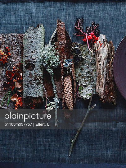 Forest finds: bark, pine cones & twigs - p1183m997757 by Ellert, L.