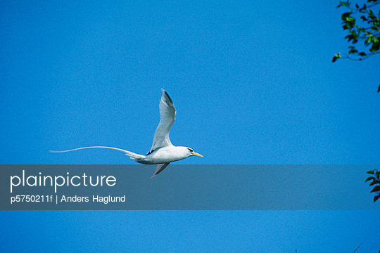 A white bird in the blue sky