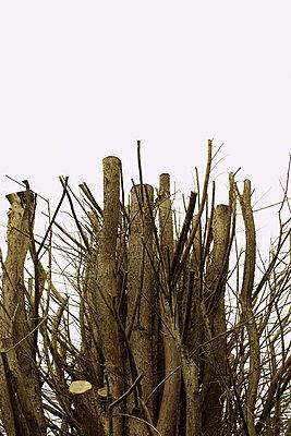 Dead trees - p1063m1461703 by Ekaterina Vasilyeva