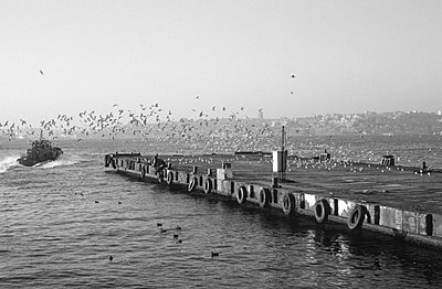 Flock of birds - p4251464 by bildhaft