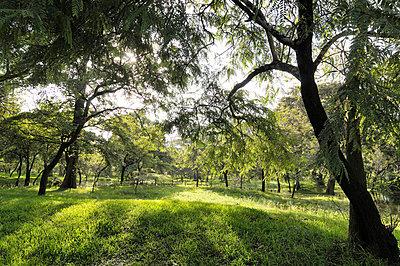 Green Sri Lanka - p715m694508 by Marina Biederbick