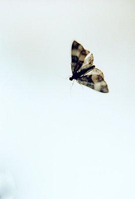 Motte - p8790024 von nico