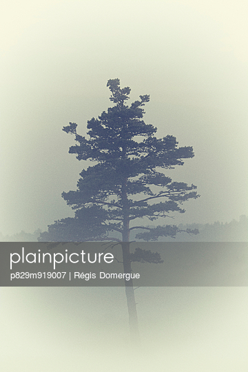 Nebel - p829m919007 von Régis Domergue