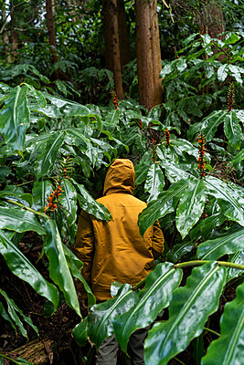 Man standing in forest surrounded by huge leaves, Sao Miguel Island, Azores, Portugal - p300m2169841 by VITTA GALLERY