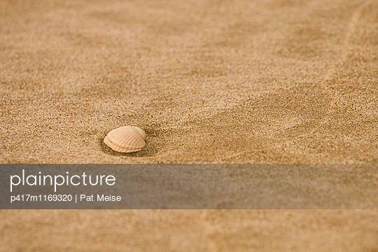 Muschel - p417m1169320 von Pat Meise