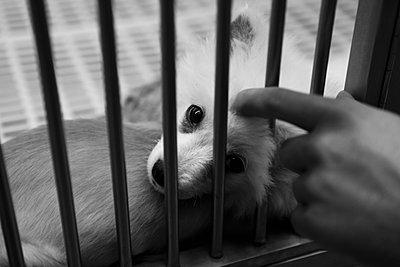 Cruelty to animals - p1129m916955 by ROBINSIMON