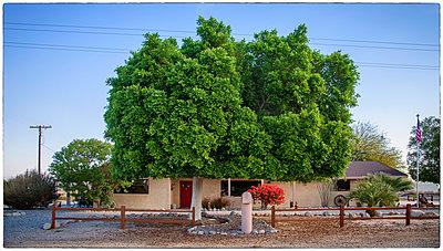 Baum vor einem Einfamilienhaus - p1154m1217582 von Tom Hogan