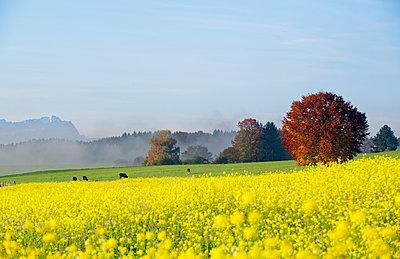 Germany, Bavaria, Upper Bavaria, autumnal andscape near Icking - p300m1568234 von Hans Lippert