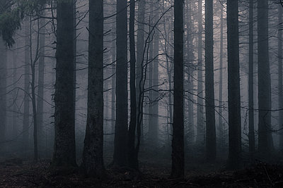 Foggy forest - p318m2087148 by Christoph Eberle