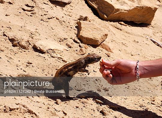 Atlashörnchen auf Fuerteventura - p162m1124242 von Beate Bussenius