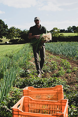 Farmer walking in a field, carrying freshly picked spring onions. - p1100m2271496 by Mint Images