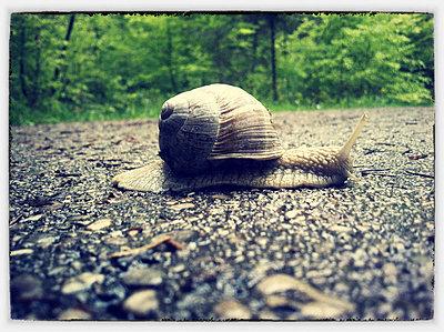 Snail - p300m1009426f by Hans Lippert