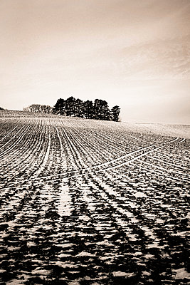 Field with tracks in the snow - p813m1217379 by B.Jaubert