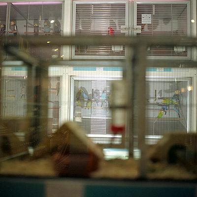 In der Tierhandlung - p0100059 von Katharina Werin