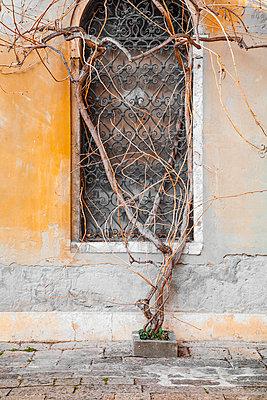 Kletterpflanze - p1280m1466770 von Dave Wall