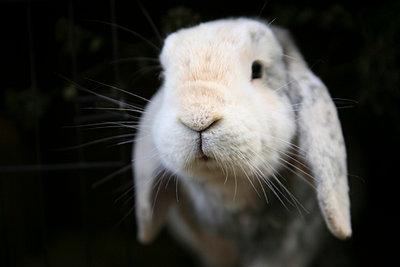 Kaninchen - p1650885 von Andrea Schoenrock