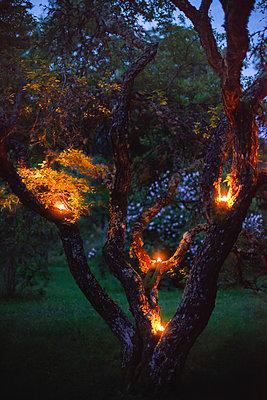 Kerzen brennen in einem Baum - p1418m1571873 von Jan Håkan Dahlström