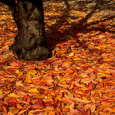 Leaves - p813m778804 by B.Jaubert