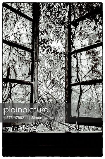 Bamboo garden through window - p378m796211 by Simon Larbalestier