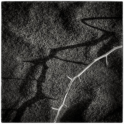 Branch casting a shadow - p1154m1110219 by Tom Hogan
